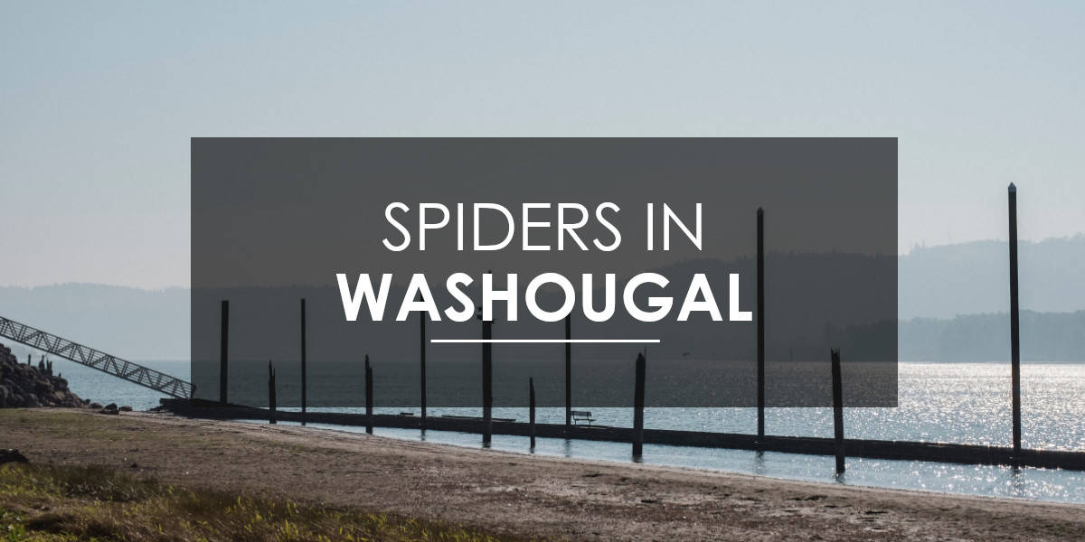 Spiders in Washougal