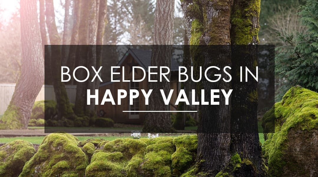 Help! Box Elder Bugs Have Infested My Happy Valley Home