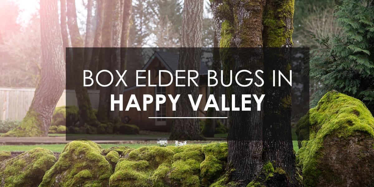 Box Elder in Happy Valley
