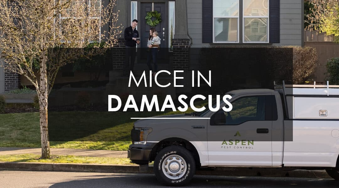 Think You Have a Mouse Infestation in Your Damascus, OR  Home?