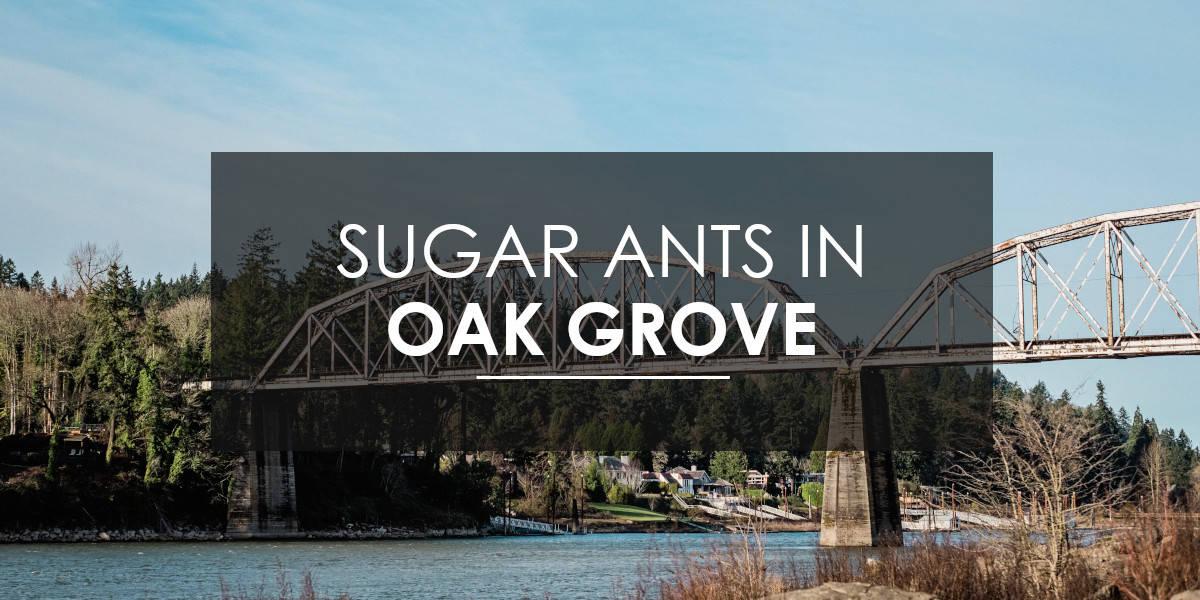 Ants in Oak Grove