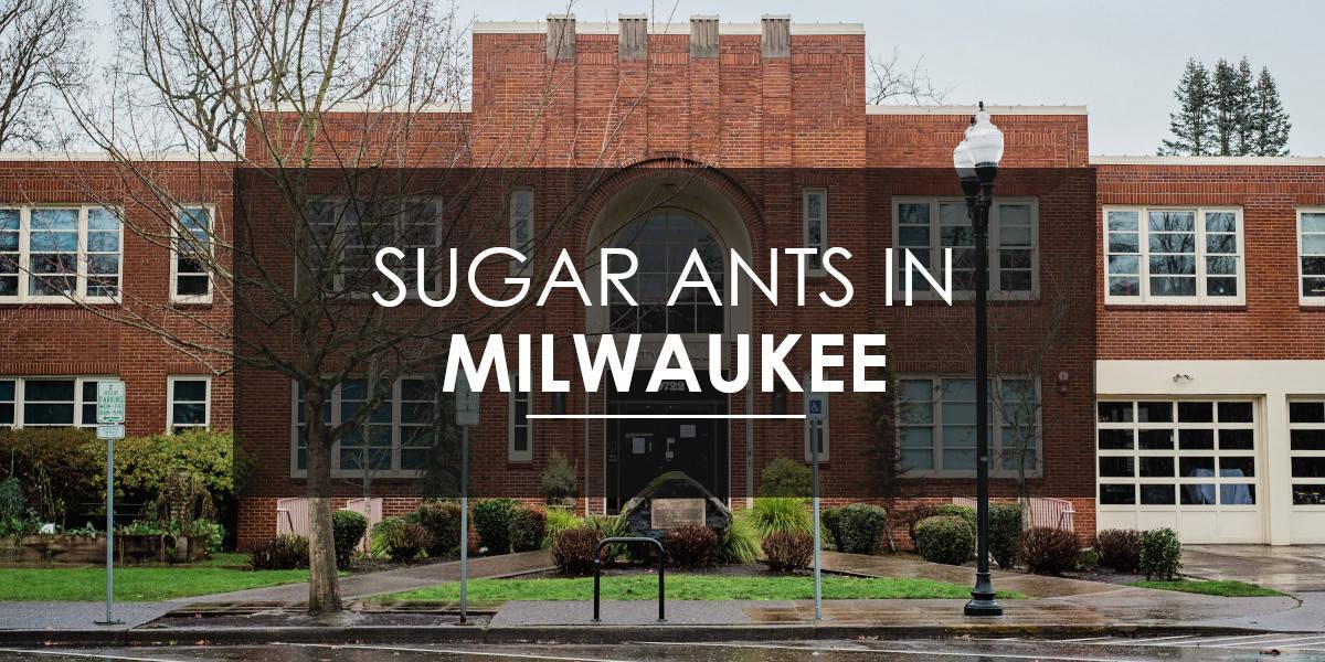 Ants in Milwaukee