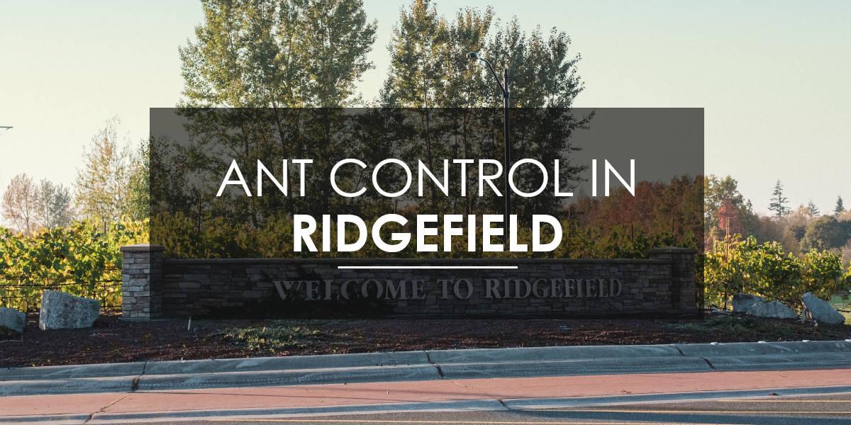 Carpenter Ants in Ridgefield