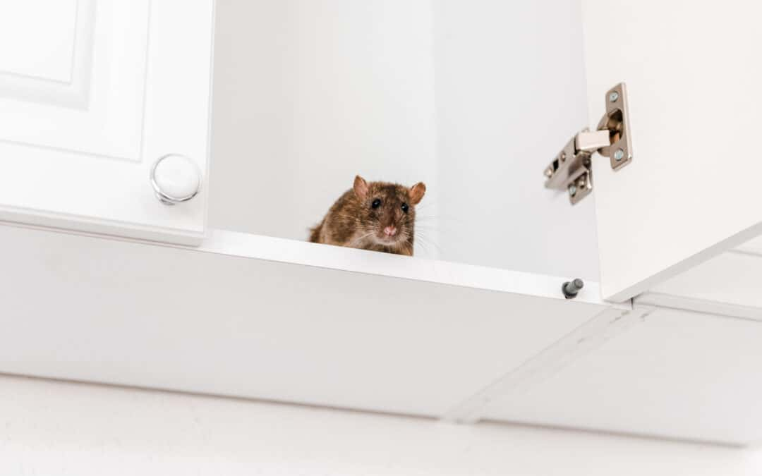 Why Your Oak Grove Home Deserves Year-Round Pest Control Services