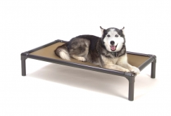 Please consider purchasing and donating a shelter bed to TAGS.  These beds provide a comfortable resting place for shelter pets.