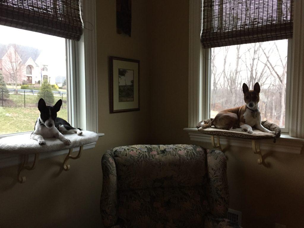 Kholiwe & Ginga on their window seats