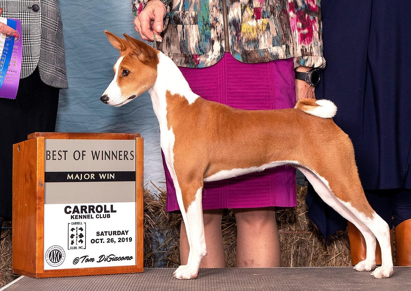 Best of winners 10.26.19 Carroll Kennel Club