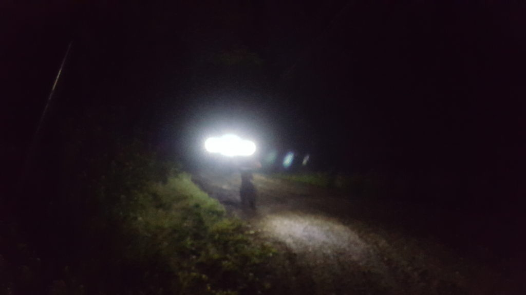 Wolf Pup Caught on Camera During Night Fat Bike Guided Tour
