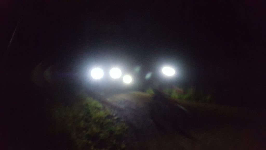 Wolves and the Night Fatbike Guided Tour