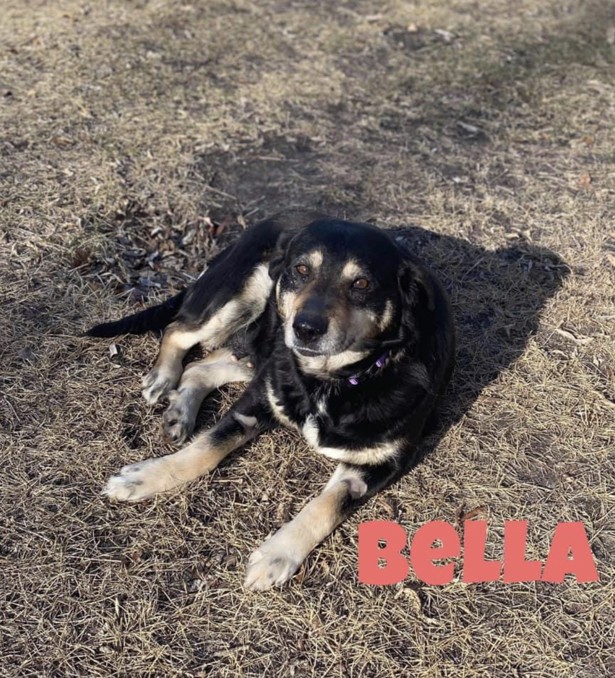Picture of Bella