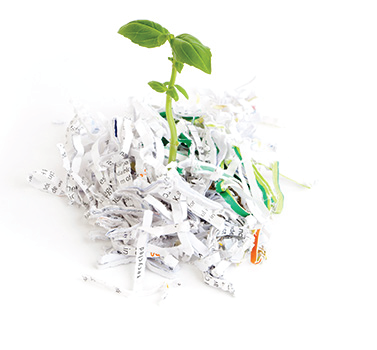 Plant with shredded paper