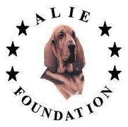 Alie Foundation