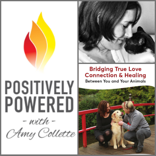 Bridging true love connection and healing with Vicki Draper