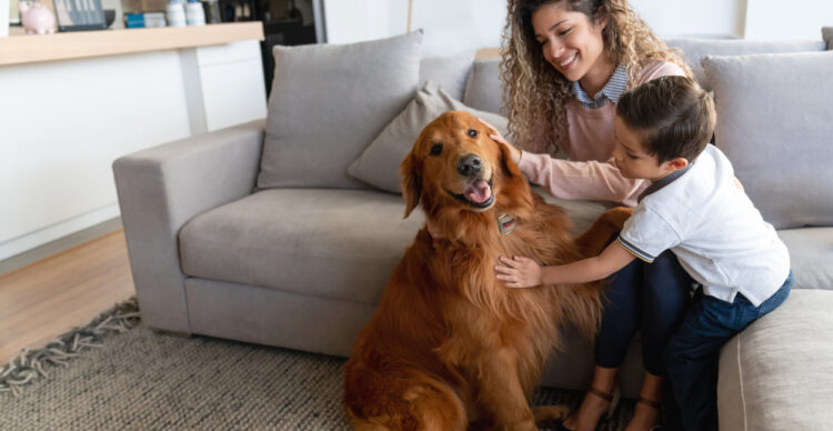 How Pet Owners Can Maintain their HVAC System