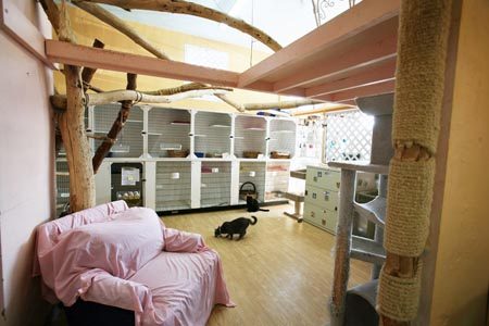 The Cat House Hotel®