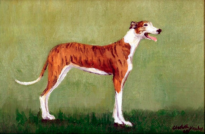 """Brindle & White Greyhound"""