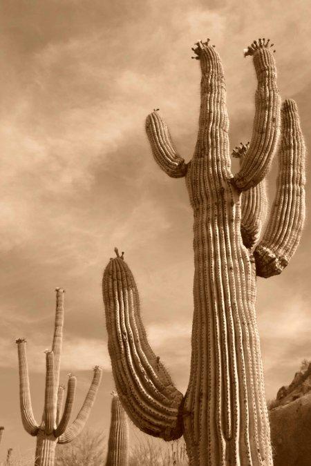 """""""Saguaro National Monument, Arizona"""""""