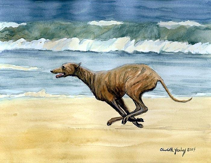 """""""Greyhound Running on Beach"""""""