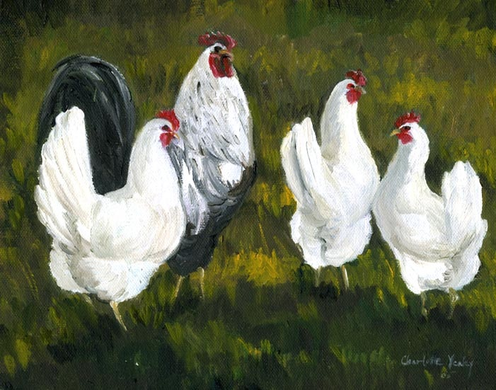 """""""Hens & Rooster"""""""