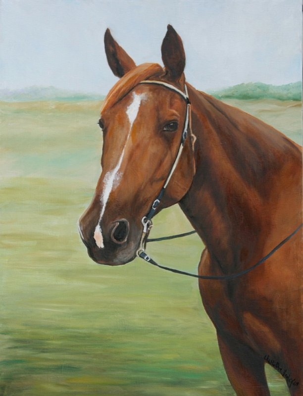"""Quarter Horse Portrait"""