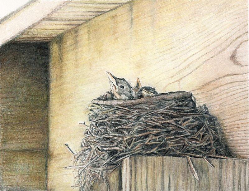 """""""Robin's Nest"""""""