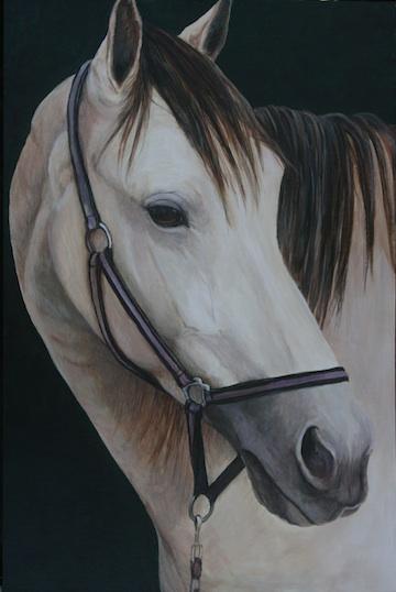 """""""Buckskin Horse"""""""