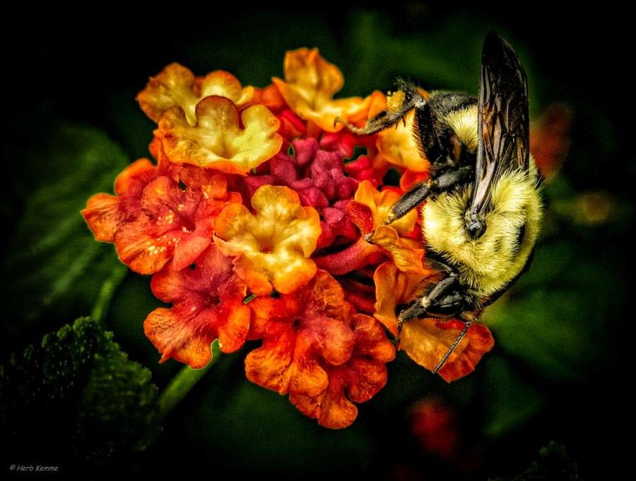 """Bee Heaven"""