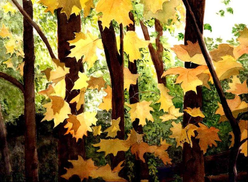 """""""Maple Leaves"""""""