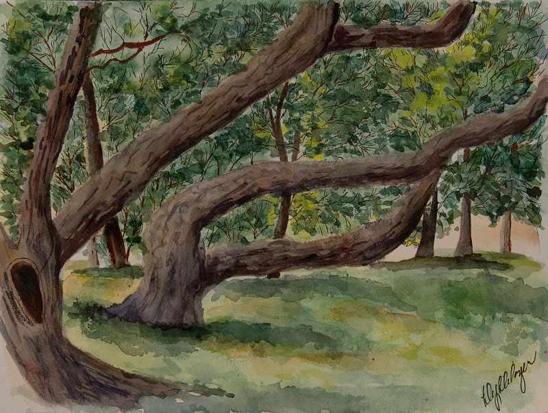 """Salzburg's Leaning Trees"""