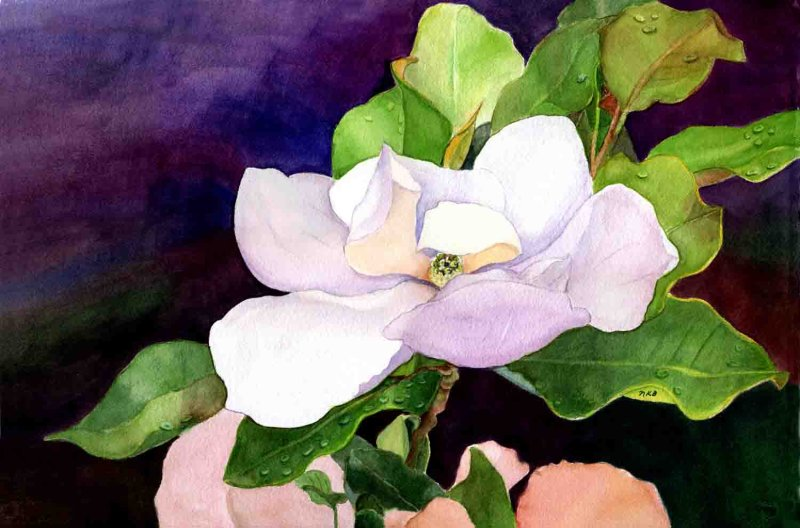 """Southern Magnolia"""