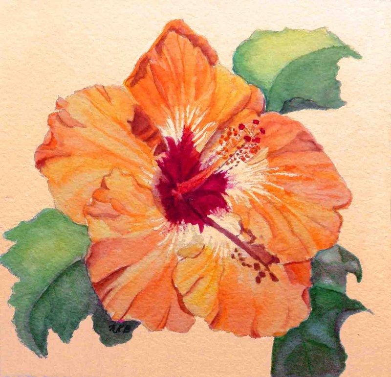 """Tropical Hibiscus"""
