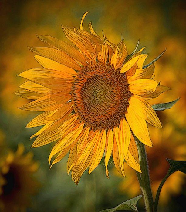 """""""Van Gogh Sunflower, MD"""""""