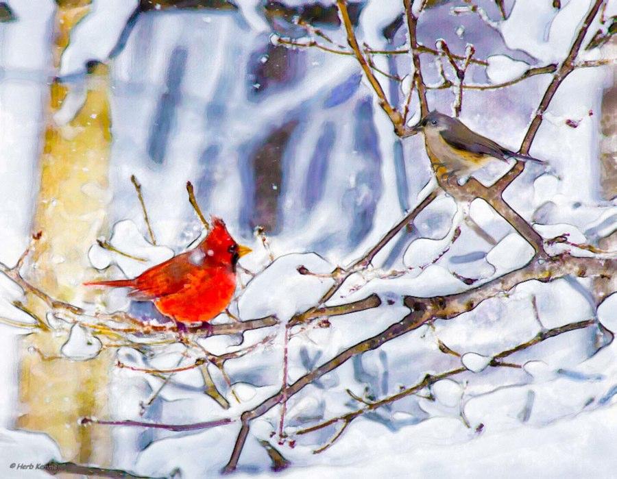 """""""Winter Color"""""""