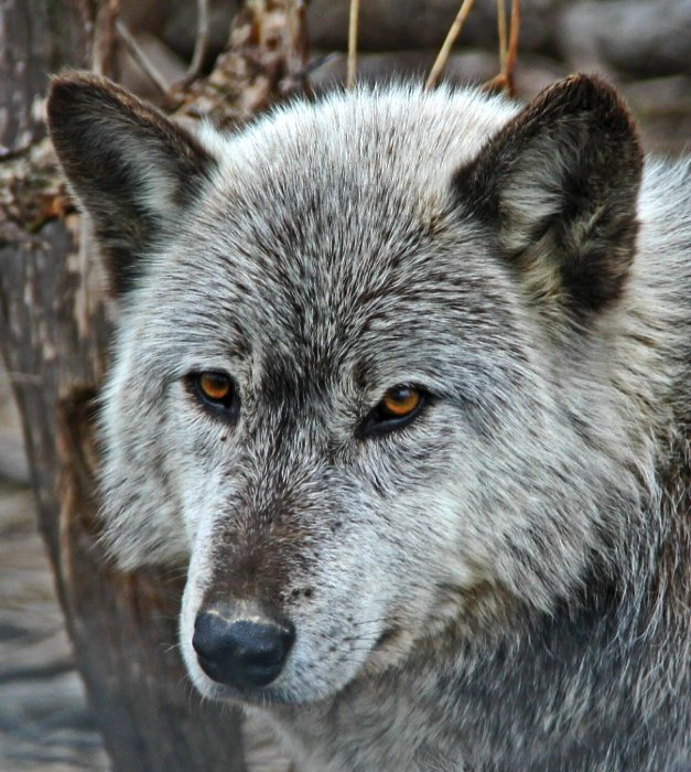 """""""Wolfhead, PA"""""""