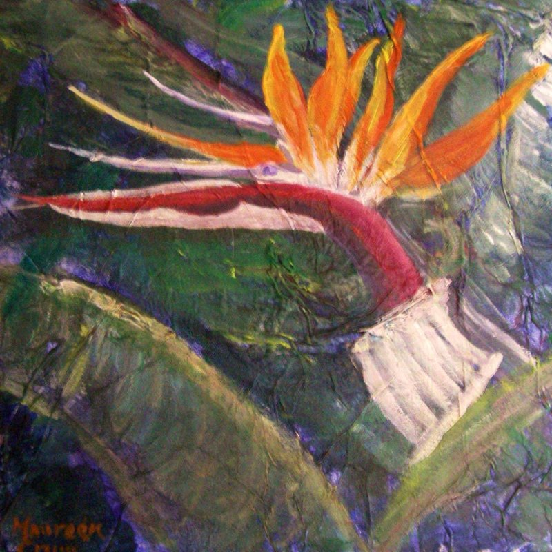 """Bird of Paradise"""
