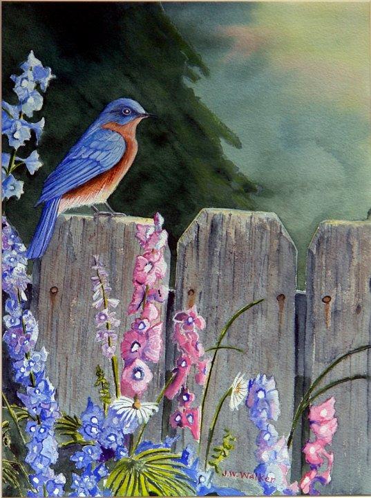 """""""Bluebird Morning"""""""