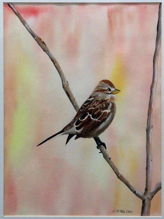 """""""Sparrow 1"""""""
