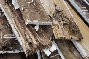 Drywood Termites Removal