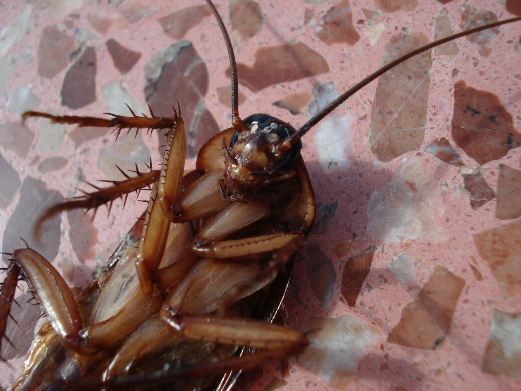 roach infestation