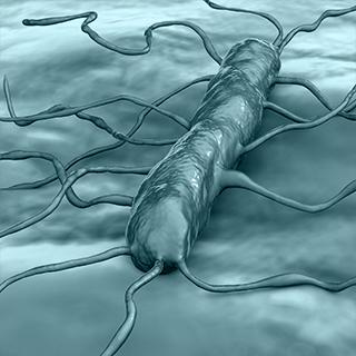 Listeria, Listeria Monocytogenes