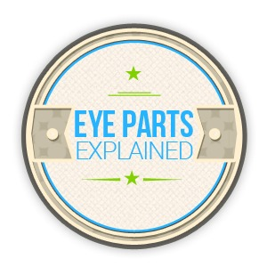 Eye Parts and Functions Explained