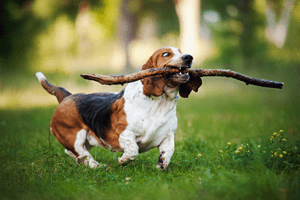 Dog ACL Surgery | Dr. Thad Respet | Sky Canyon Veterinary Hospital | Grand Junction Colorado