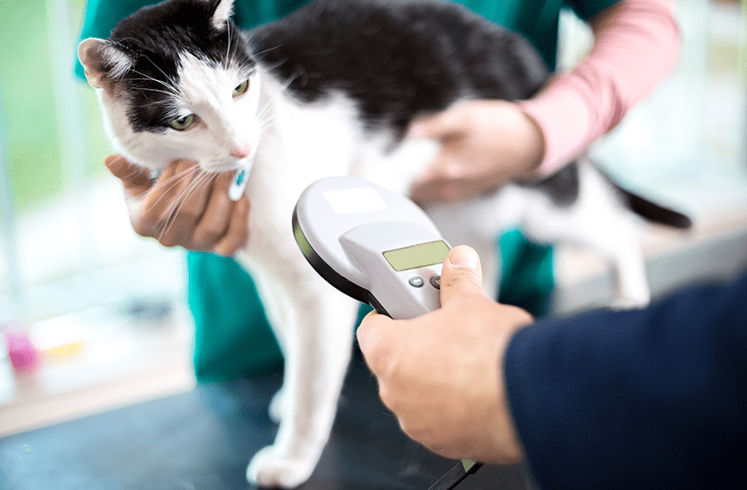 Microchipping Indentification for Dogs & Cats | Sky Canyon Veterinary Hospital | Grand Junction Colorado