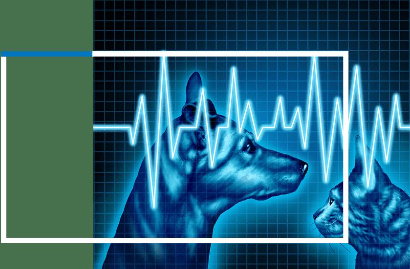 Emergency Vet Services | Sky Canyon Veterinary Hospital | Grand Junction Colorado