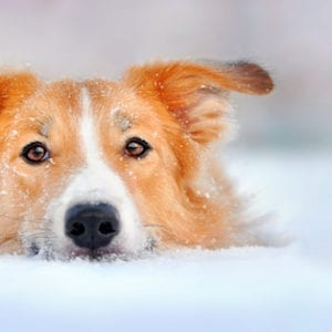 Hypothermia In Dogs & Cats   Sky Canyon Veterinary Hospital   Grand Junction Colorado