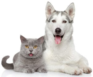 Cat & Dog Teeth Cleaning Guide   Sky Canyon Veterinary Hospital   Grand Junction Colorado