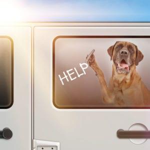 Colorado Dog In Hot Car Law Info   Sky Canyon Veterinary Hospital   Grand Junction Colorado