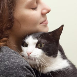 Cat Adoption Tips   Sky Canyon Veterinary Hospital   Grand Junction Colorado