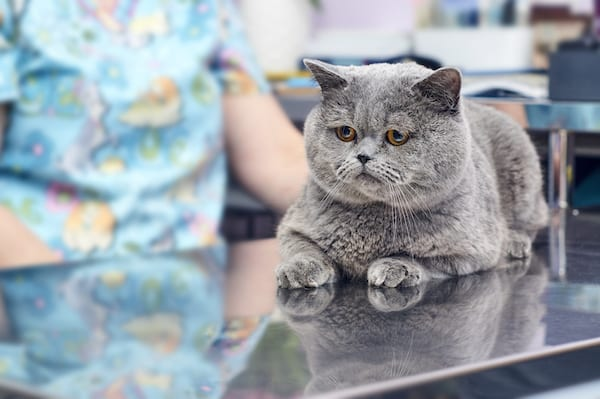 Low Stress Vet Visits For Cats | Sky Canyon Veterinary Hospital | Grand Junction Colorado
