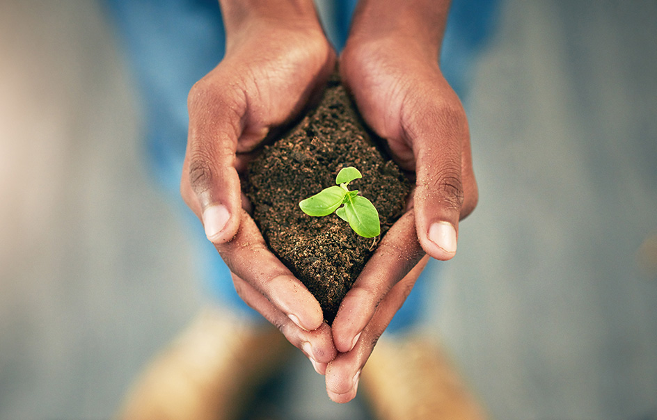 A pair of hands holding soil with a leaf sprout